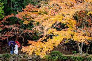 大きな楓の樹の下で