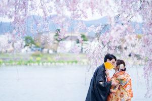 桜と和装前撮り