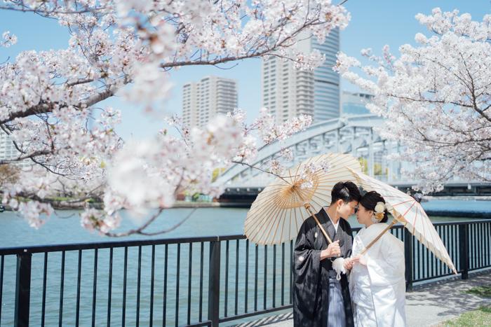 青空の下で桜和装前撮り